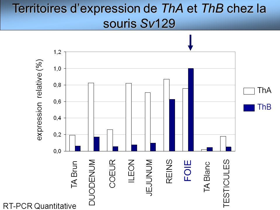 Territoires d'expression de ThA et ThB chez la souris Sv129