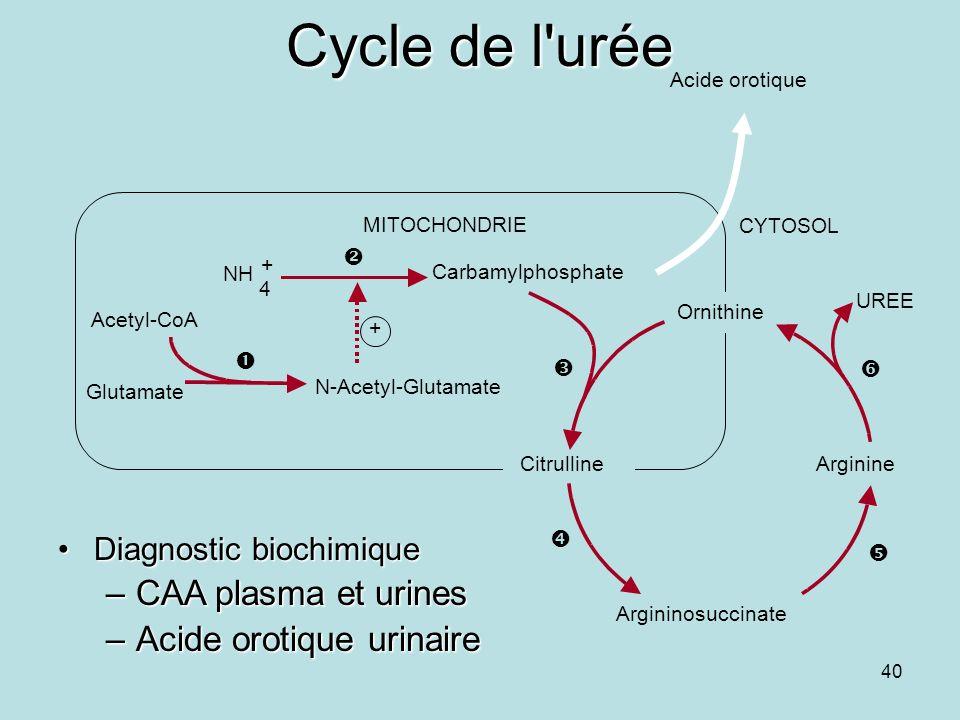Cycle de l urée CAA plasma et urines Acide orotique urinaire