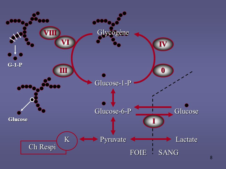 VIII Glycogène VI IV III Glucose-1-P Glucose-6-P Glucose I K Ch Respi