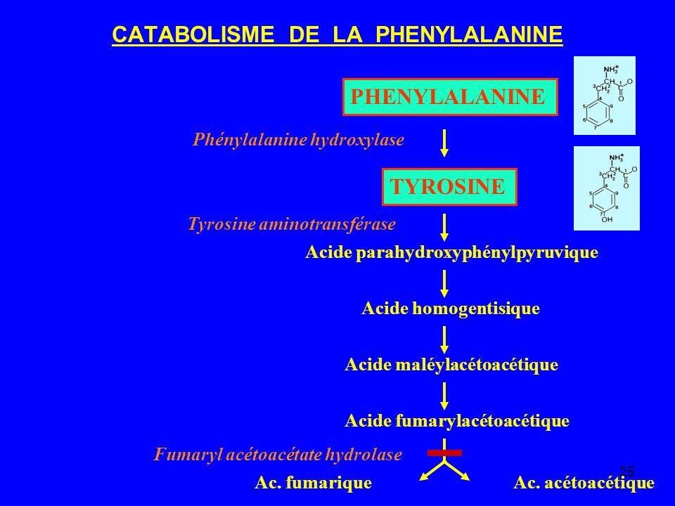 CATABOLISME DE LA PHENYLALANINE