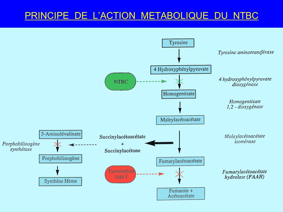 PRINCIPE DE L'ACTION METABOLIQUE DU NTBC