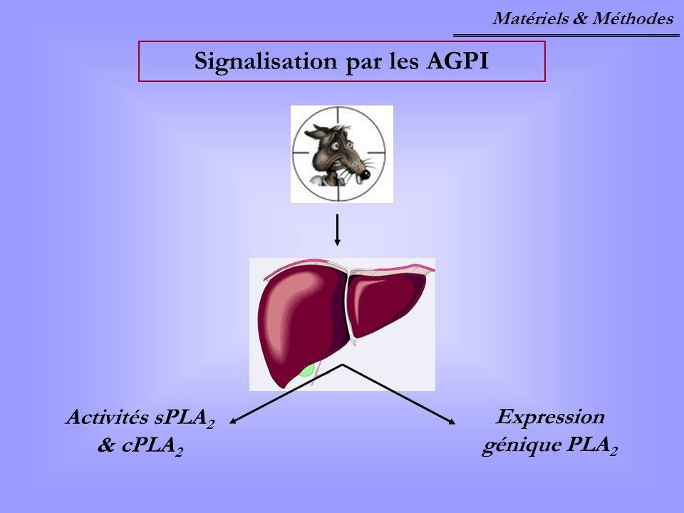 Signalisation par les AGPI Expression génique PLA2