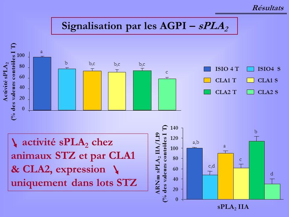 Signalisation par les AGPI – sPLA2