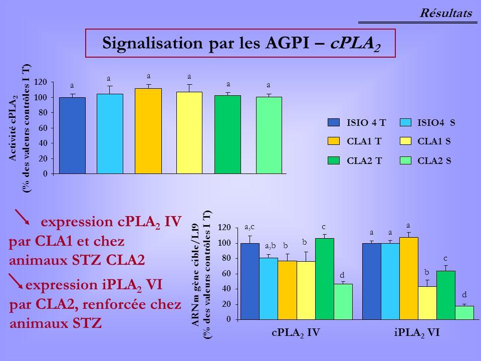 Signalisation par les AGPI – cPLA2