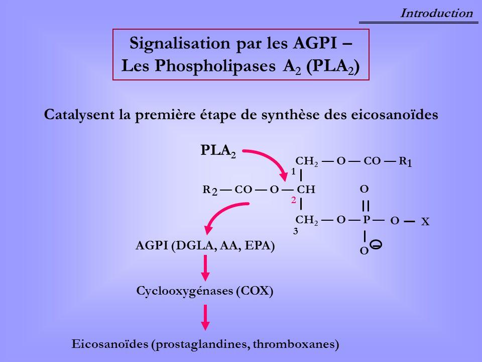 Signalisation par les AGPI – Les Phospholipases A2 (PLA2)