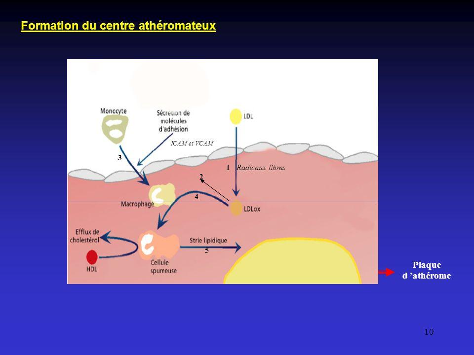 Formation du centre athéromateux