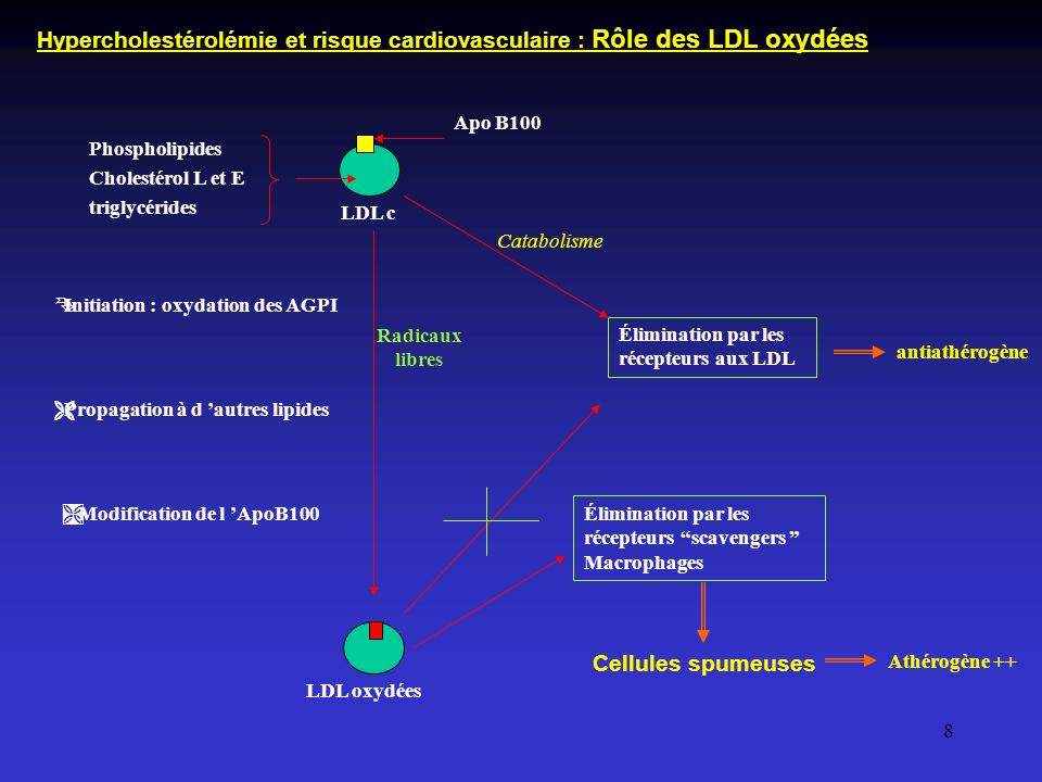 Hypercholestérolémie et risque cardiovasculaire : Rôle des LDL oxydées