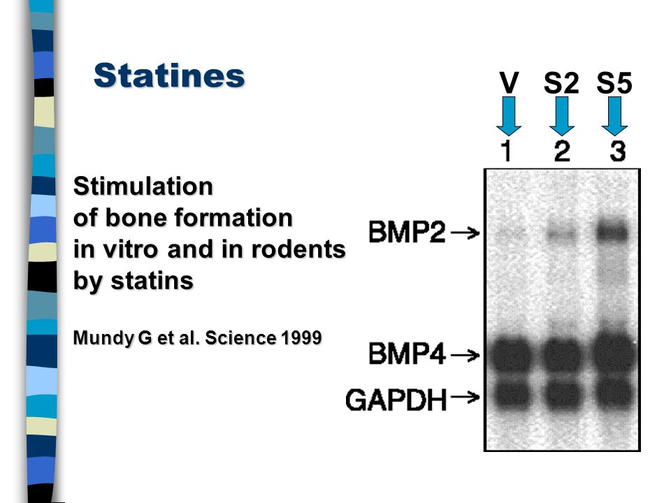 Statines V S2 S5 Stimulation of bone formation in vitro and in rodents