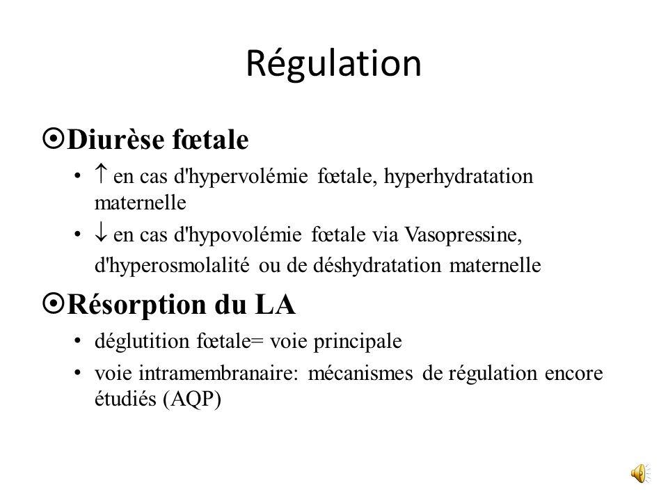 Régulation Diurèse fœtale Résorption du LA