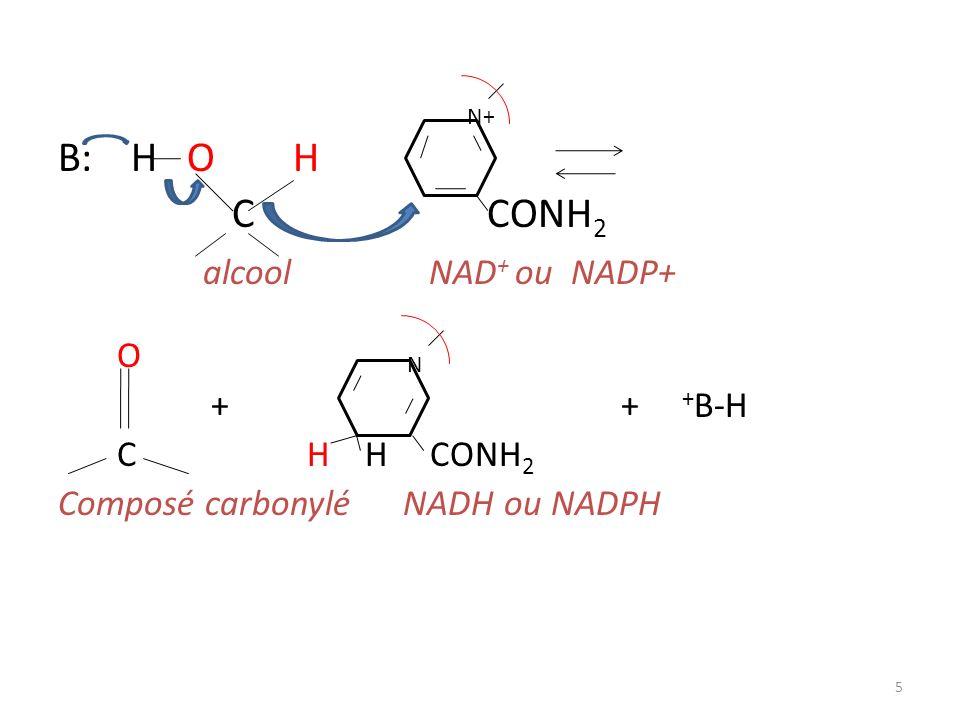 B: H O H C CONH2 alcool NAD+ ou NADP+ O + + +B-H C H H CONH2