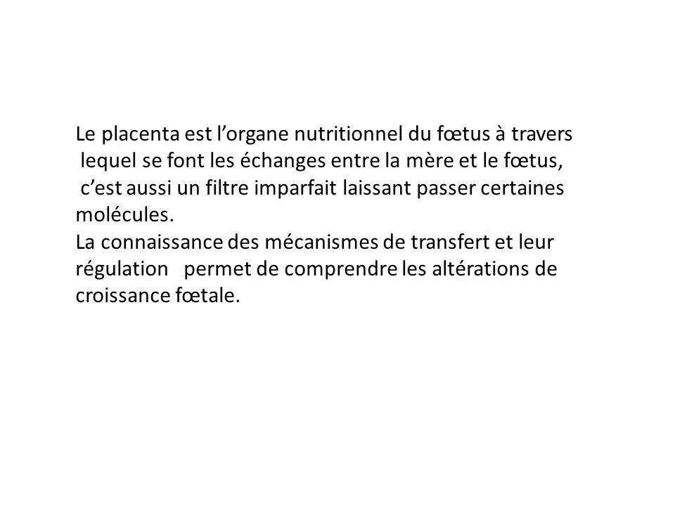 Le placenta est l'organe nutritionnel du fœtus à travers