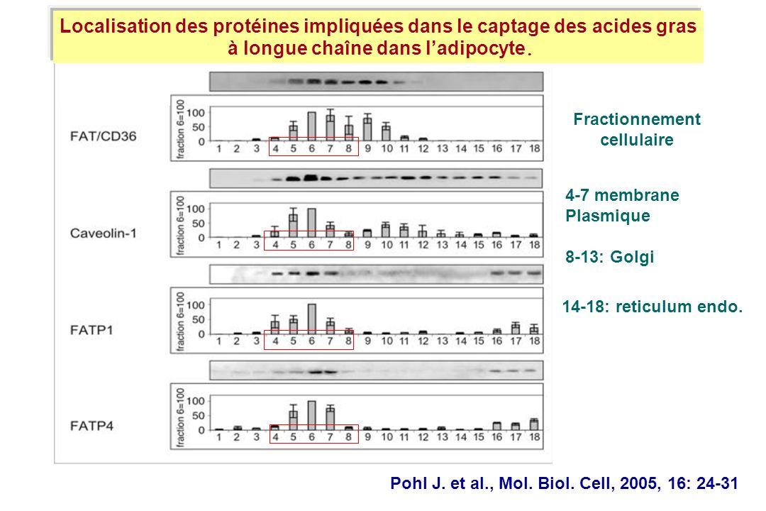 Localisation des protéines impliquées dans le captage des acides gras
