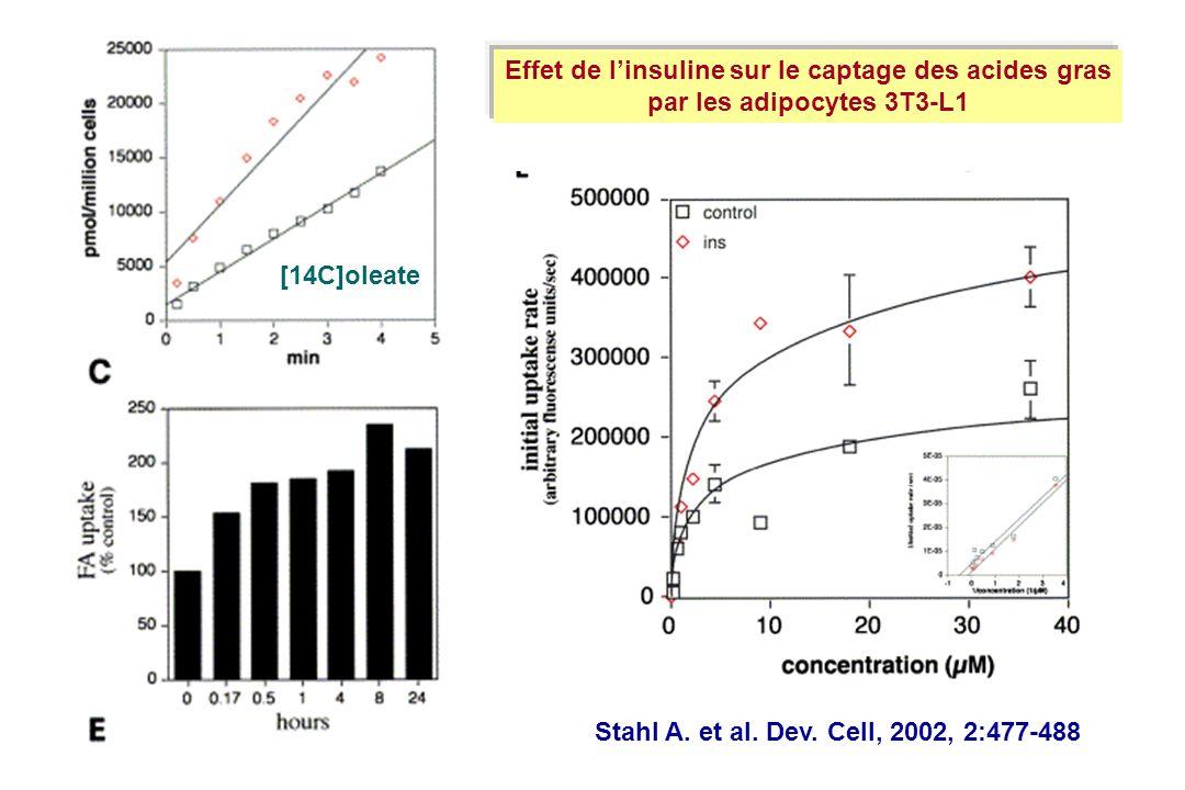 Effet de l'insuline sur le captage des acides gras