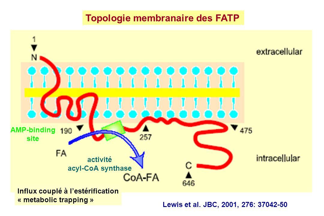 Topologie membranaire des FATP
