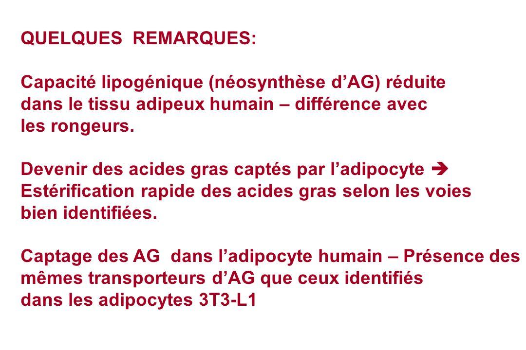 QUELQUES REMARQUES:Capacité lipogénique (néosynthèse d'AG) réduite. dans le tissu adipeux humain – différence avec.