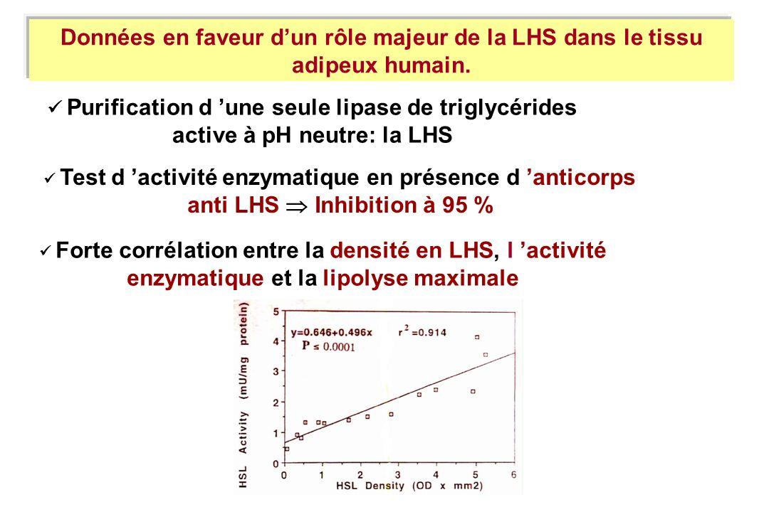 Données en faveur d'un rôle majeur de la LHS dans le tissu adipeux humain.