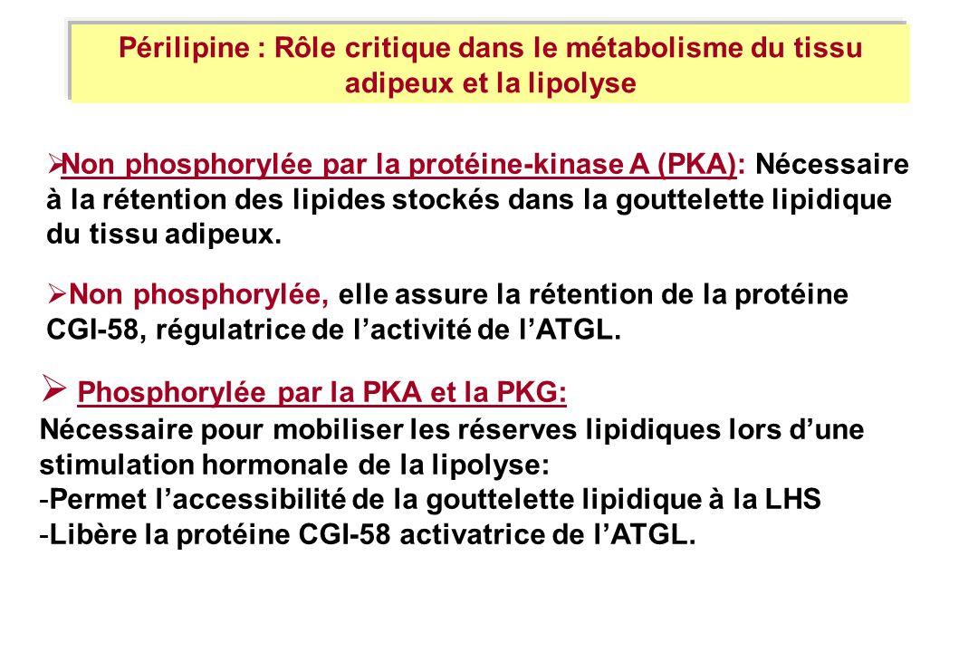 Phosphorylée par la PKA et la PKG: