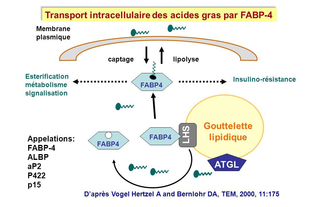 Gouttelette lipidique ATGL