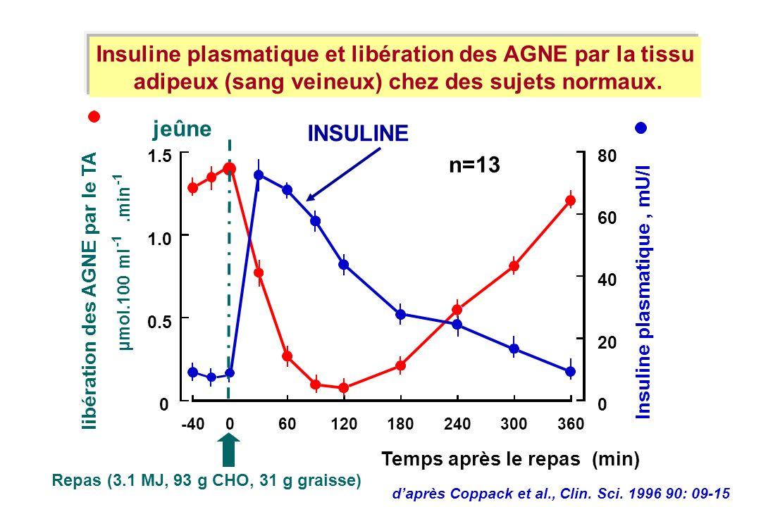 Insuline plasmatique et libération des AGNE par la tissu