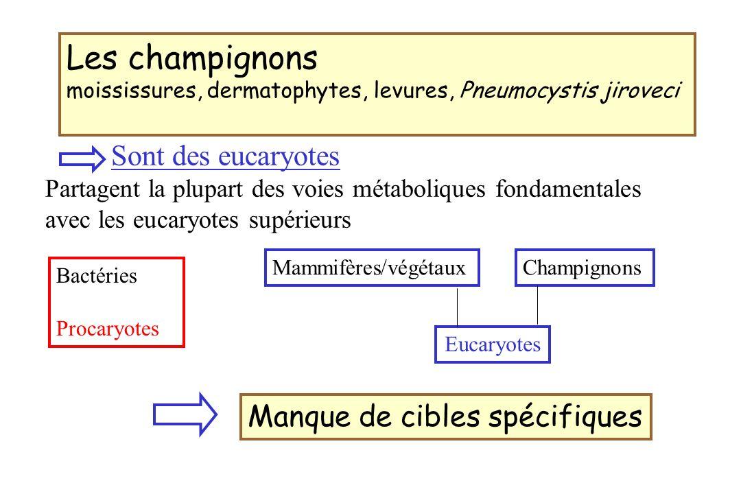 Les champignons Manque de cibles spécifiques Sont des eucaryotes
