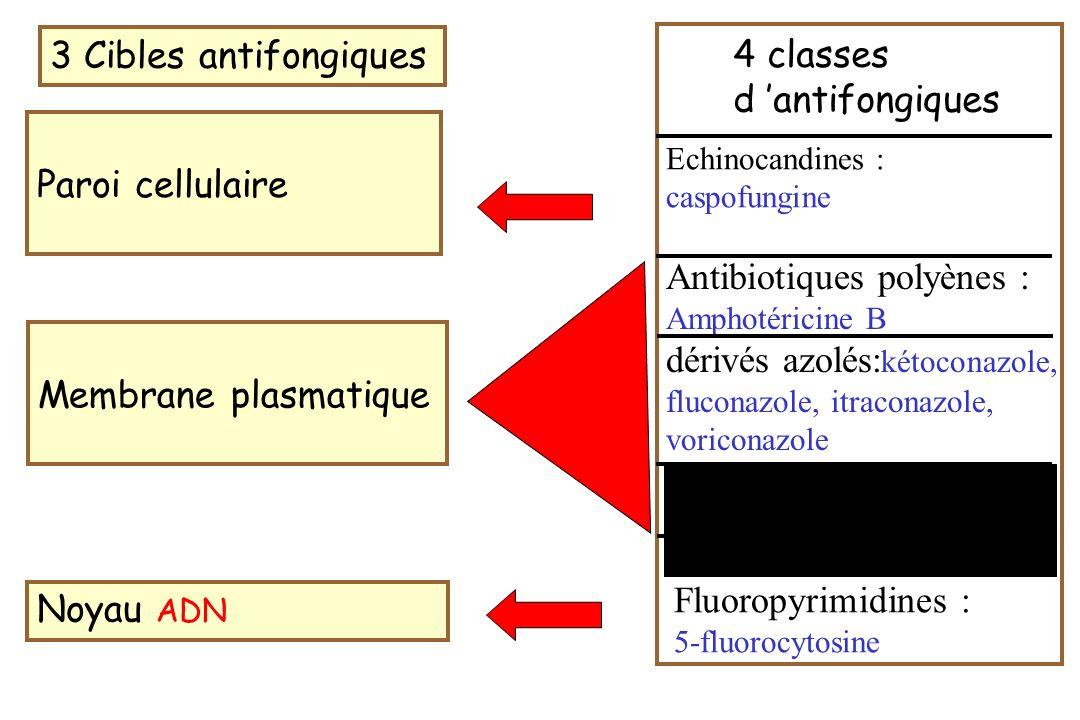 Antibiotiques polyènes : dérivés azolés:kétoconazole,