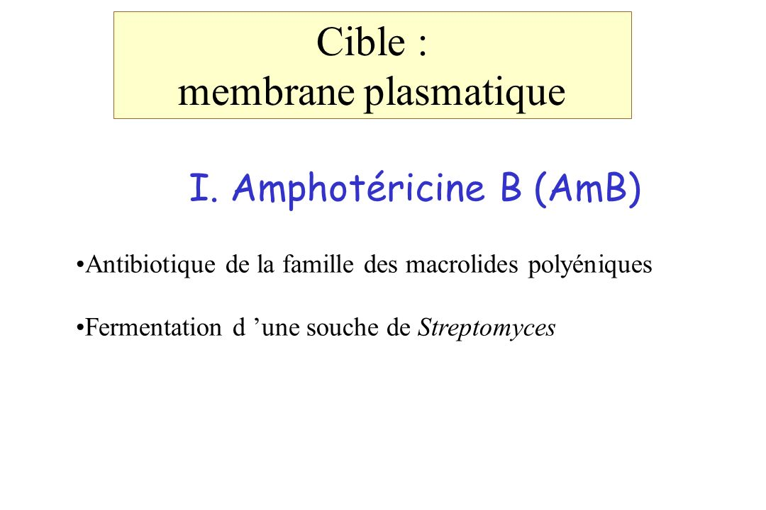 Cible : membrane plasmatique I. Amphotéricine B (AmB)