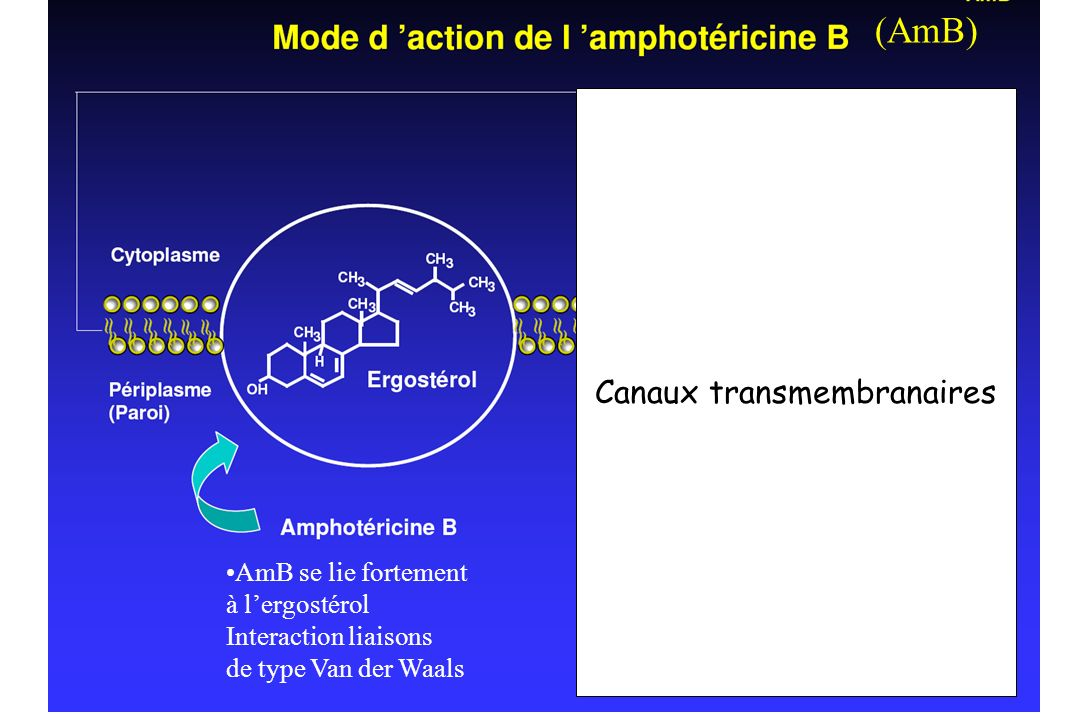 Canaux transmembranaires