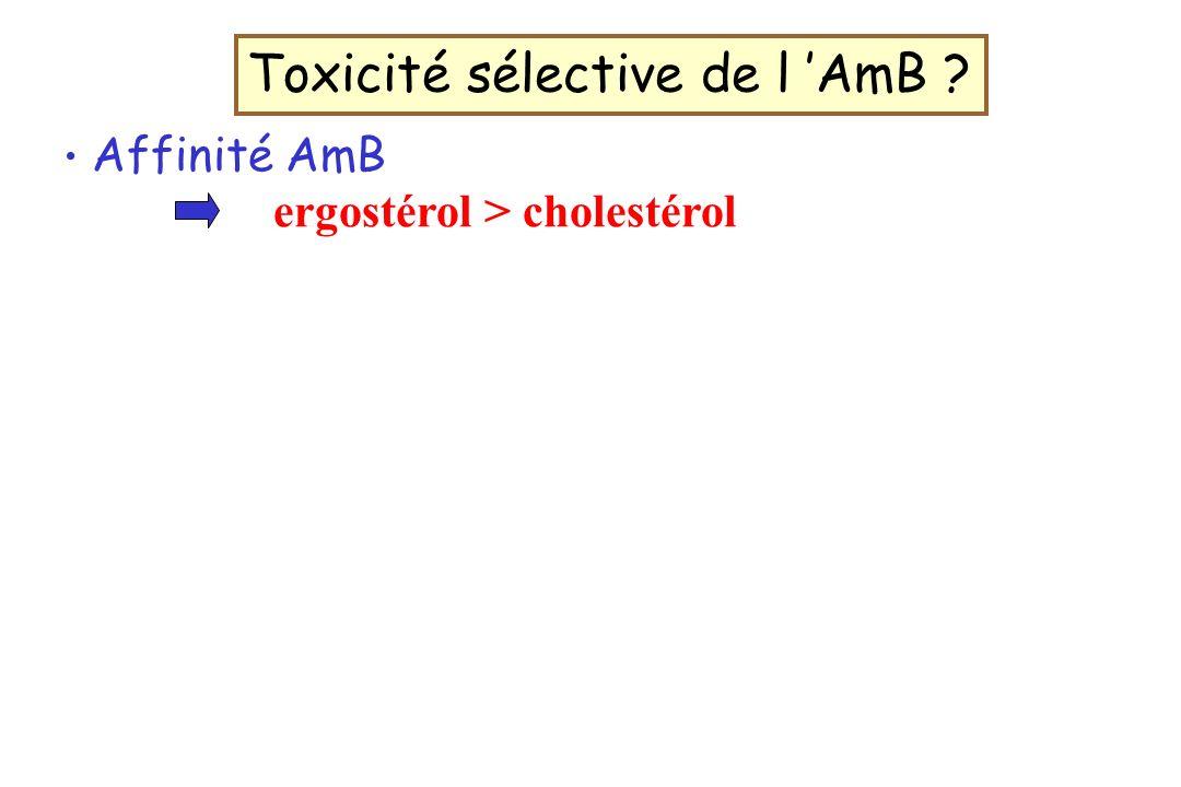Toxicité sélective de l 'AmB