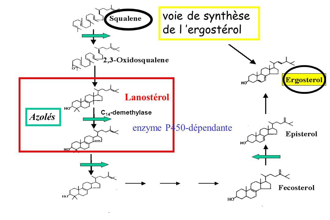 voie de synthèse de l 'ergostérol enzyme P450-dépendante Lanostérol