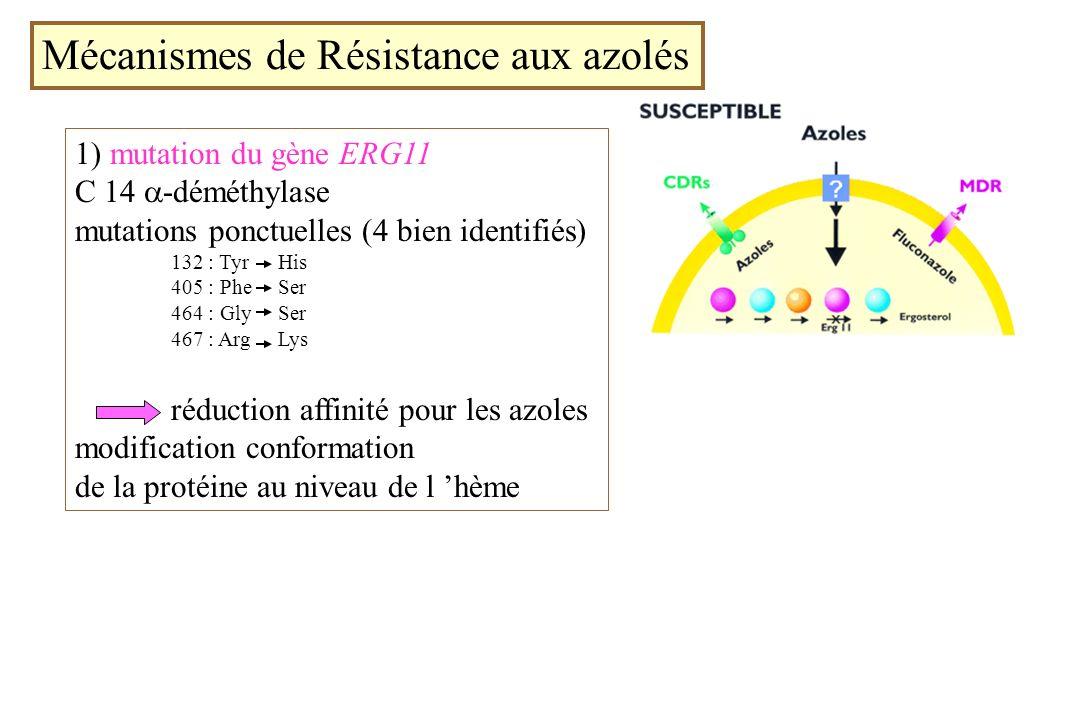 Mécanismes de Résistance aux azolés