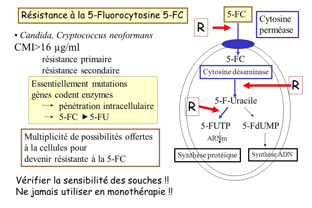 R R R R CMI>16 µg/ml Résistance à la 5-Fluorocytosine 5-FC 5-FC