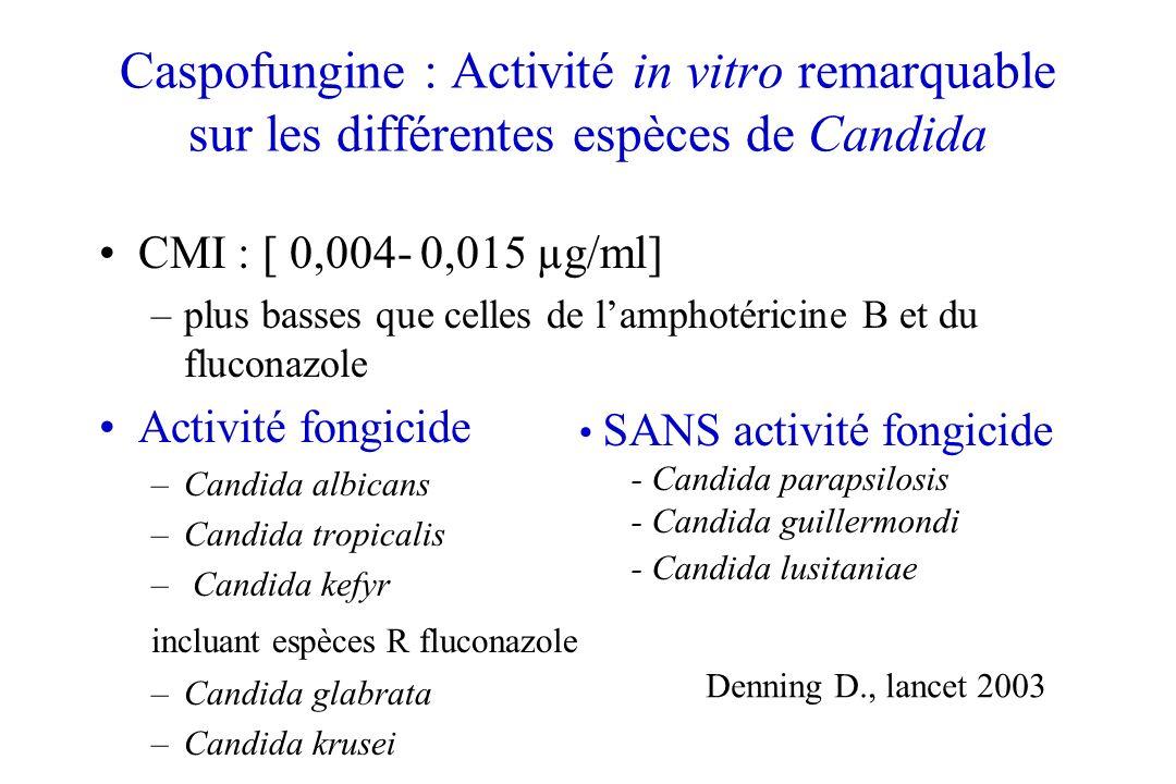 Caspofungine : Activité in vitro remarquable sur les différentes espèces de Candida