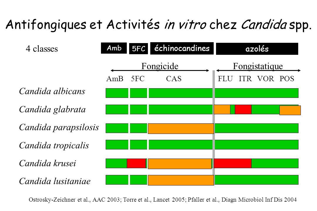 Antifongiques et Activités in vitro chez Candida spp.
