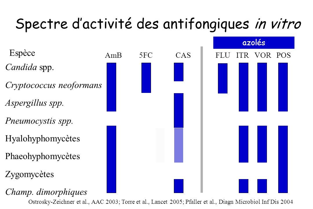Spectre d'activité des antifongiques in vitro