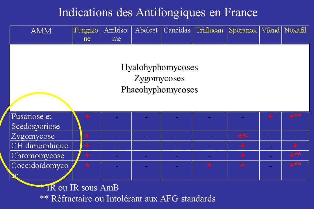 Indications des Antifongiques en France