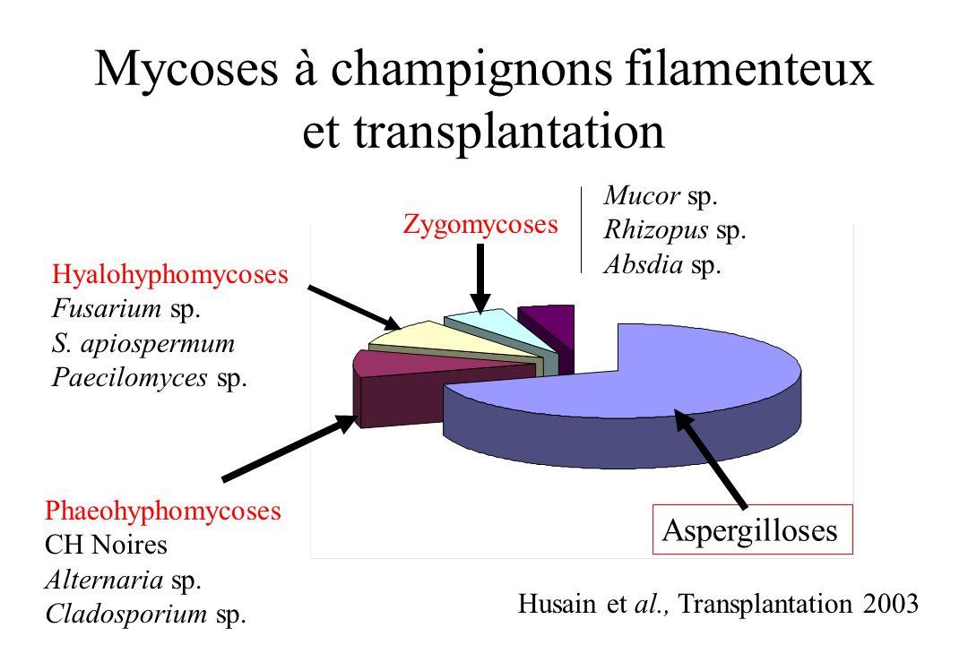 Mycoses à champignons filamenteux et transplantation