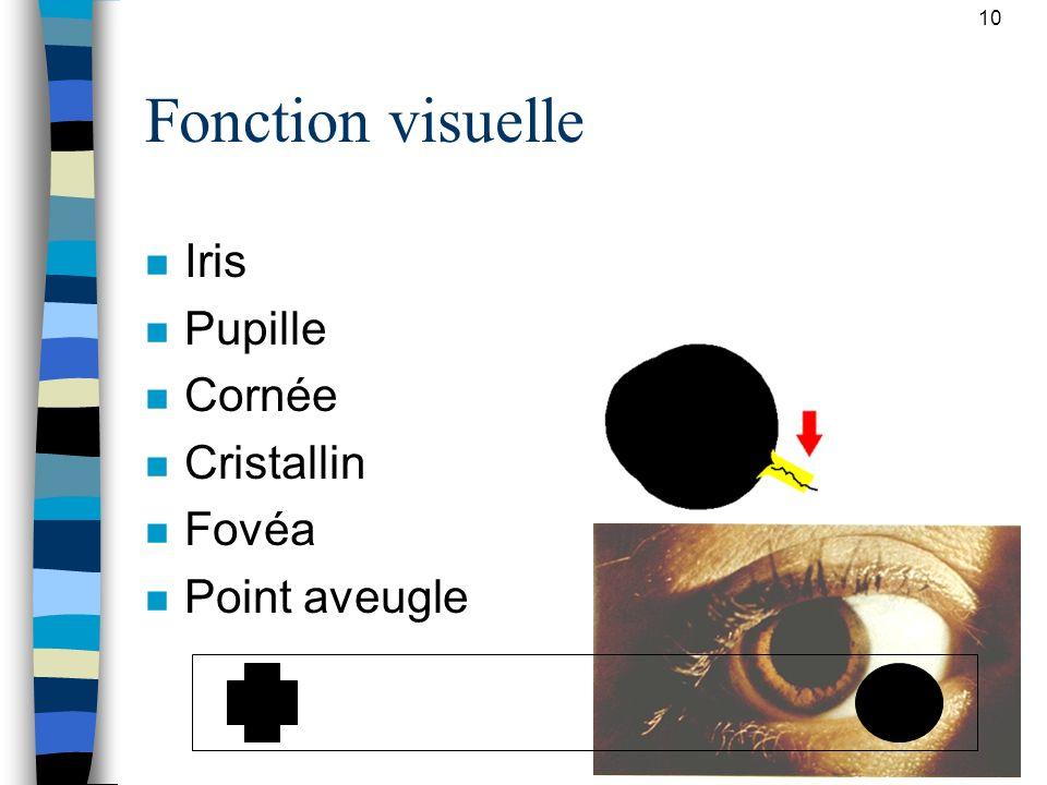 Fonction visuelle Iris Pupille Cornée Cristallin Fovéa Point aveugle