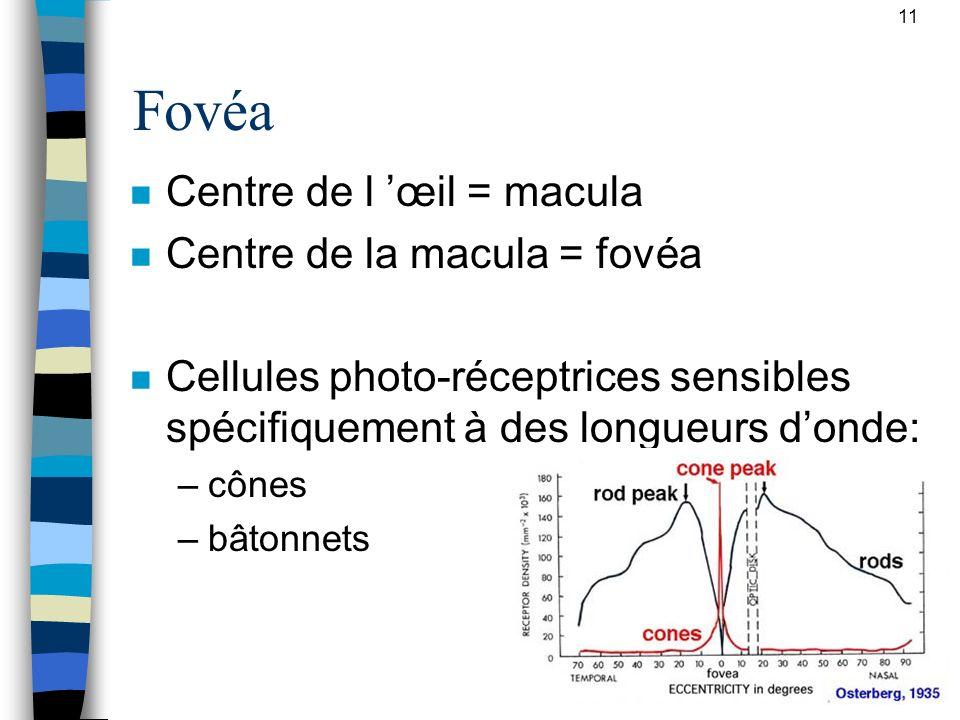 Fovéa Centre de l 'œil = macula Centre de la macula = fovéa