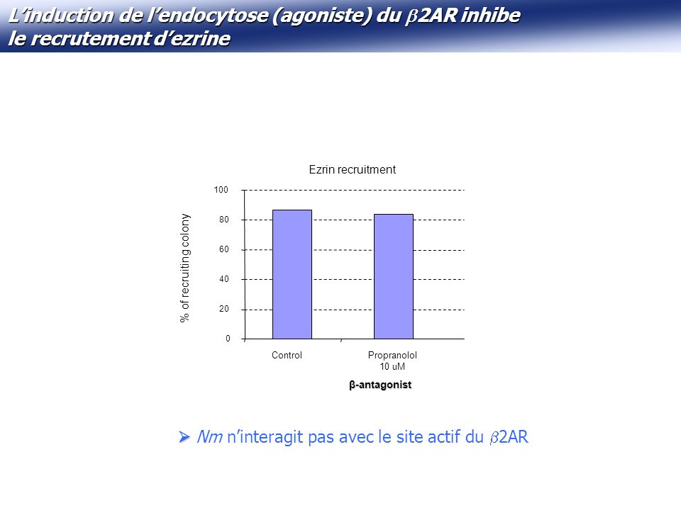 L'induction de l'endocytose (agoniste) du 2AR inhibe le recrutement d'ezrine