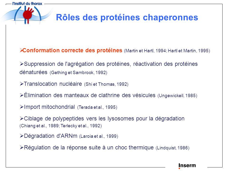 Rôles des protéines chaperonnes