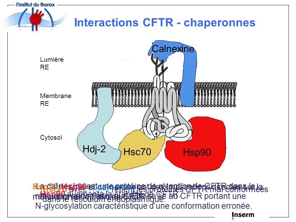 Interactions CFTR - chaperonnes