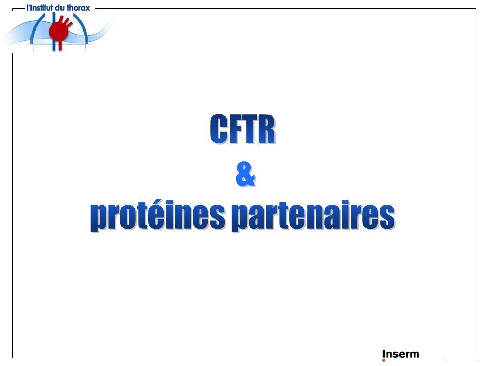 protéines partenaires