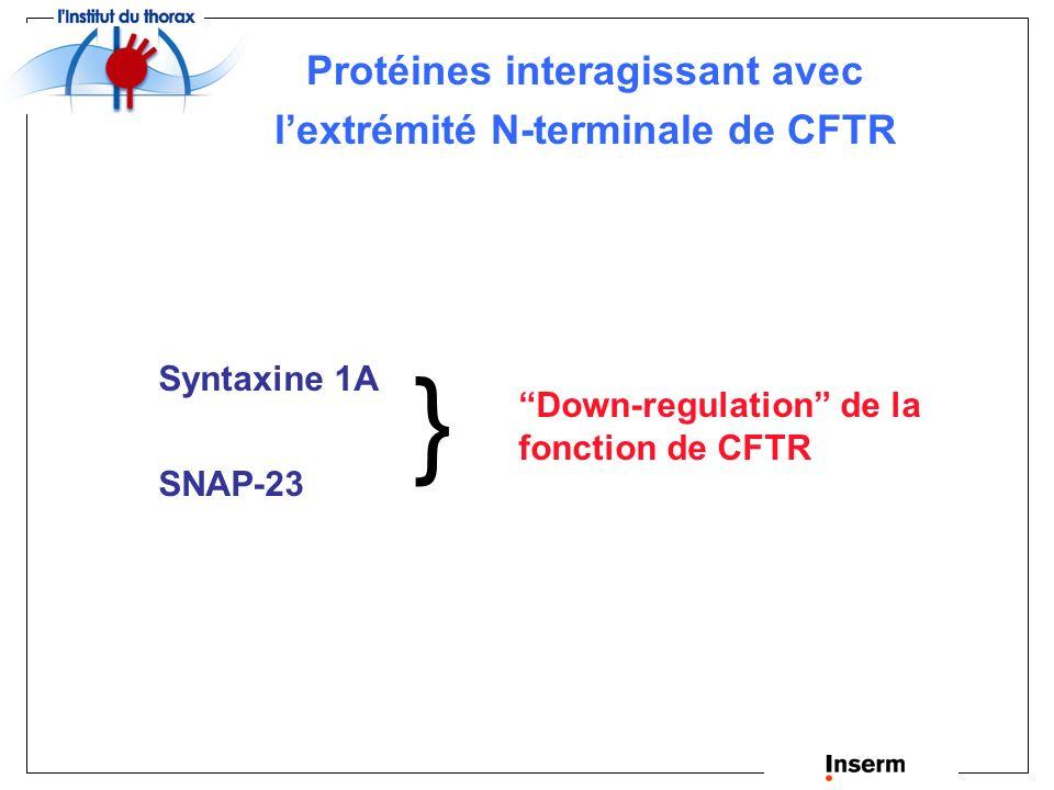 Protéines interagissant avec l'extrémité N-terminale de CFTR