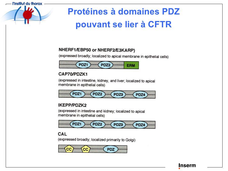 Protéines à domaines PDZ