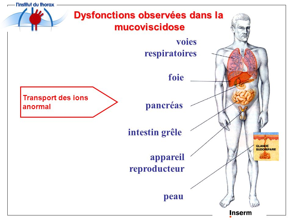 Dysfonctions observées dans la