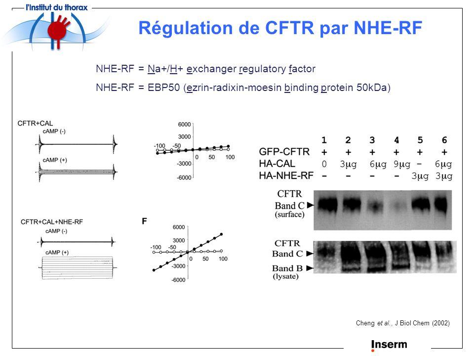 Régulation de CFTR par NHE-RF