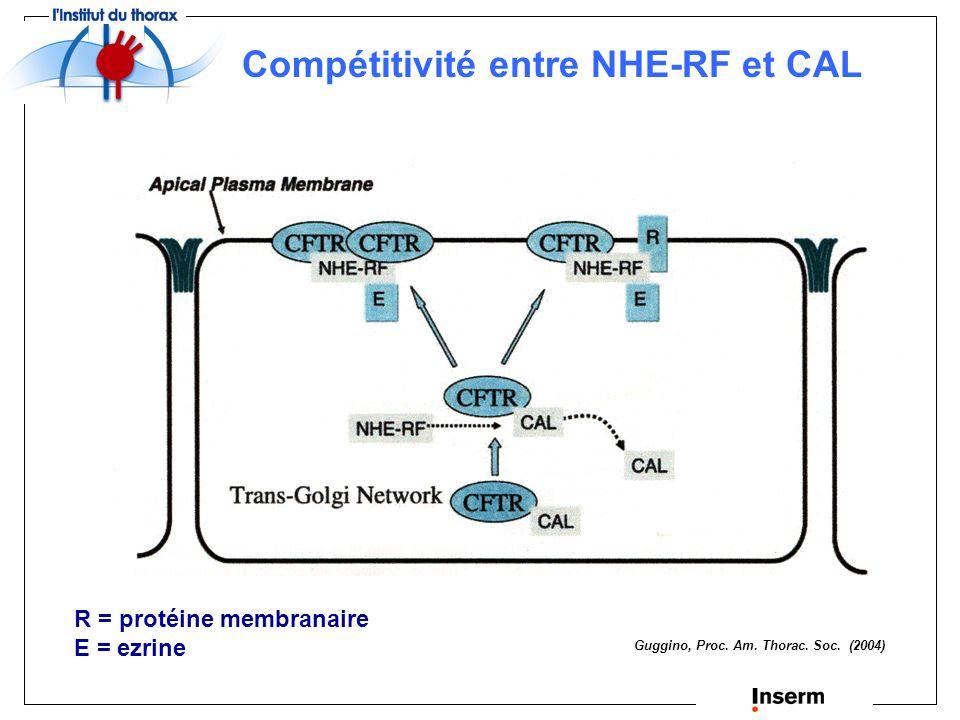 Compétitivité entre NHE-RF et CAL