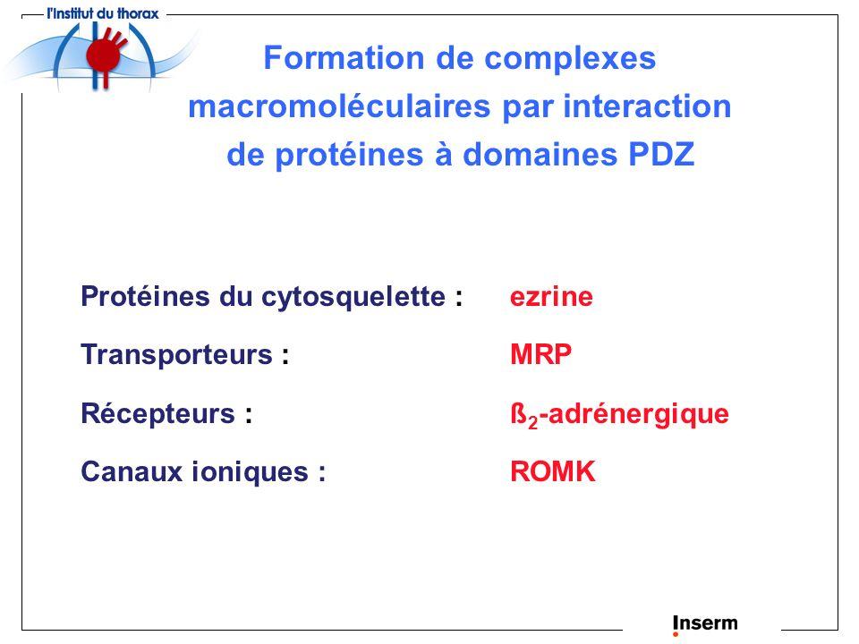 Formation de complexes macromoléculaires par interaction