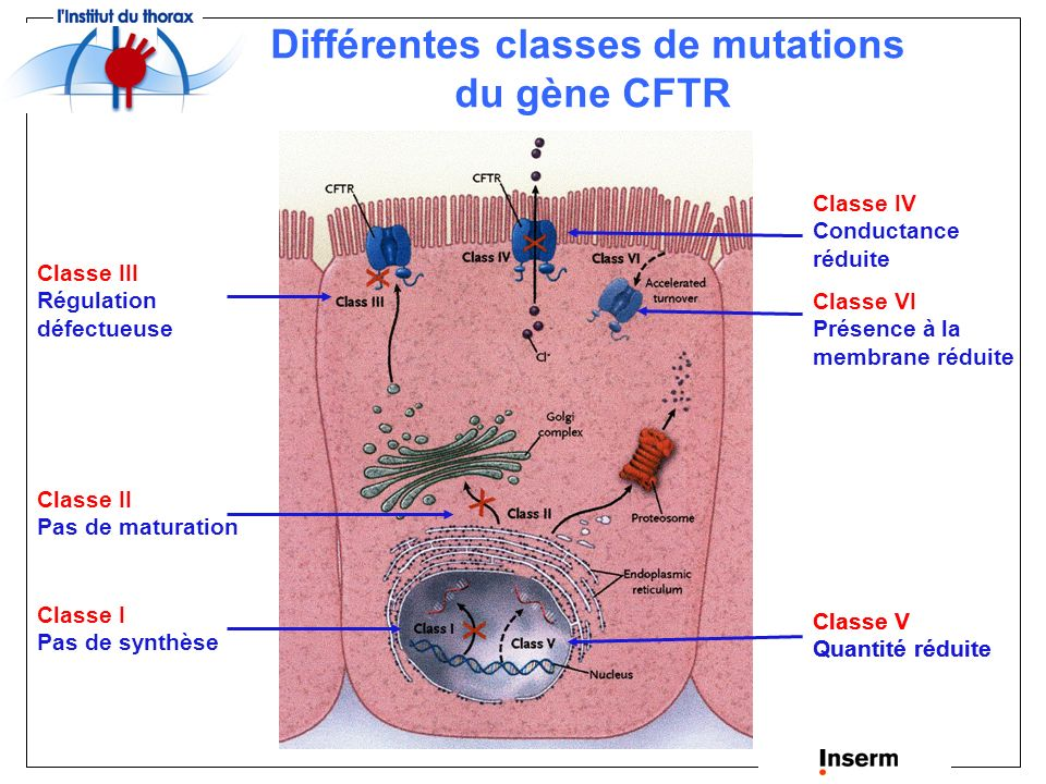 Différentes classes de mutations