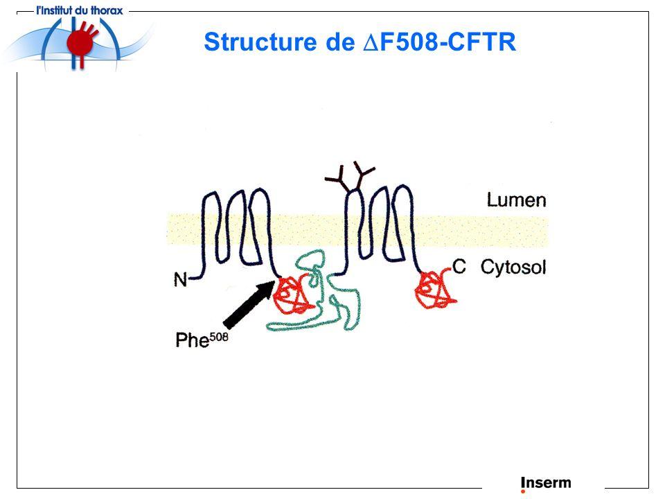Structure de F508-CFTR